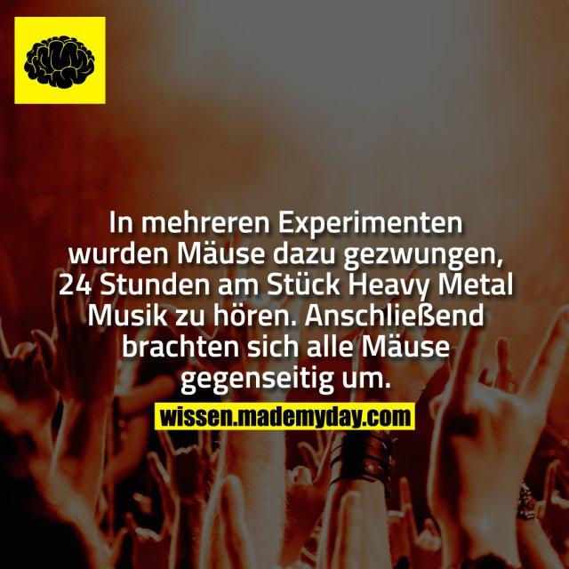 In mehreren Experimenten wurden Mäuse dazu gezwungen, 24 Stunden am Stück Heavy Metal Musik zu hören. Anschließend brachten sich alle Mäuse gegenseitig um.