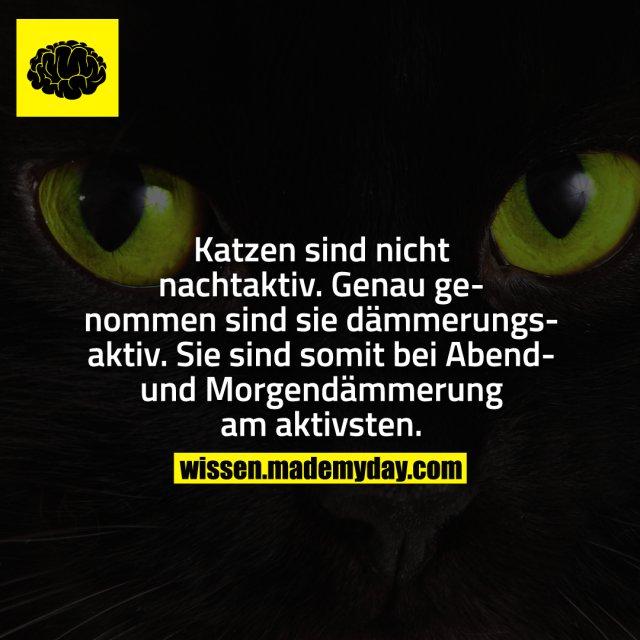 Katzen sind nicht nachtaktiv. Genau genommen sind sie dämmerungsaktiv. Sie sind somit bei Abend- und Morgendämmerung am aktivsten.