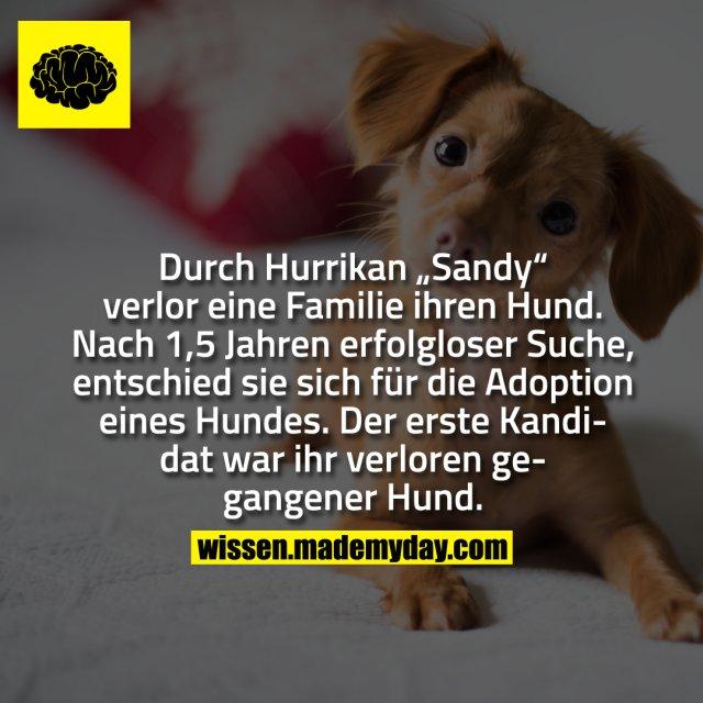 """Durch Hurrikan """"Sandy"""" verlor eine Familie ihren Hund. Nach 1,5 Jahren erfolgloser Suche, entschied sie sich für die Adoption eines Hundes. Der erste Kandidat war ihr verloren gegangener Hund."""
