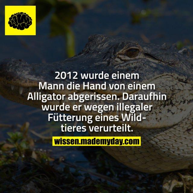 2012 wurde einem Man die Hand von einem Alligator abgerissen. Daraufhin wurde er wegen illegaler Fütterung eines Wildtieres verurteilt.