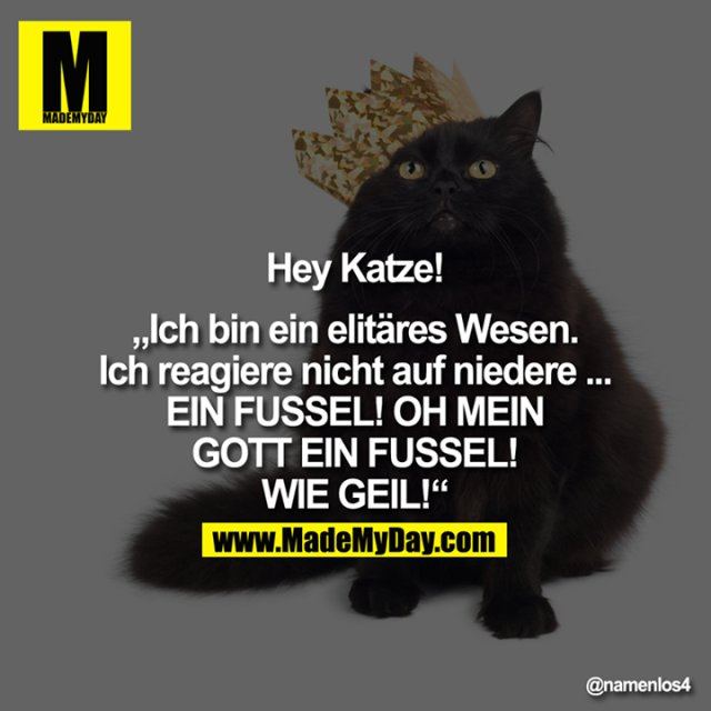 """Hey Katze!<br /> <br /> """"Ich bin ein elitäres Wesen. Ich reagiere nicht auf niedere ...<br /> EIN FUSSEL! OH MEIN GOTT EIN FUSSEL! WIE GEIL!"""""""