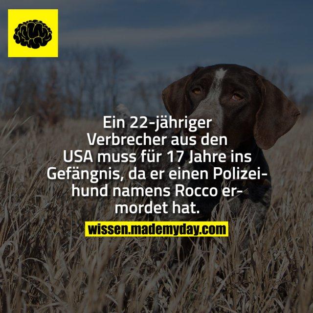 Ein 22-jähriger Verbrecher aus den USA muss für 17 Jahre ins Gefängnis, da er einen Polizeihund namens Rocco ermordet hat.