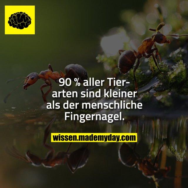 90 % aller Tierarten sind kleiner als der menschliche Fingernagel.