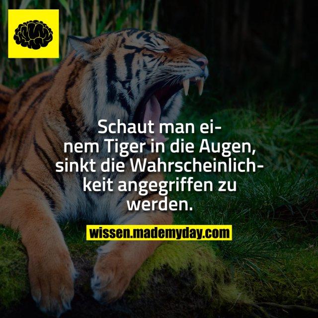 Schaut man einem Tiger in die Augen, sinkt die Wahrscheinlichkeit angegriffen zu werden.