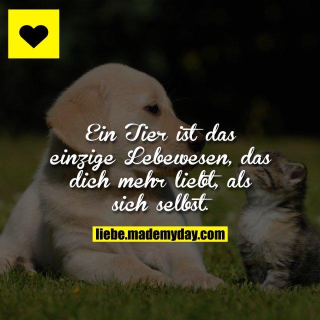 Sprüche Tiere Liebe Zitate Sprüche Tiere 2019 09 28