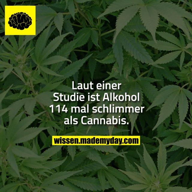 Laut einer Studie ist Alkohol 114 mal schlimmer als Cannabis.