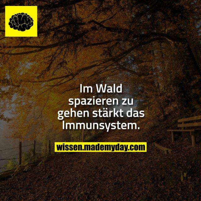 Im Wald spazieren zu gehen stärkt das Immunsystem.
