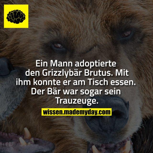 Ein Mann adoptierte den Grizzlybär Brutus. Mit ihm konnte er am Tisch essen. Der Bär war sogar sein Trauzeuge.