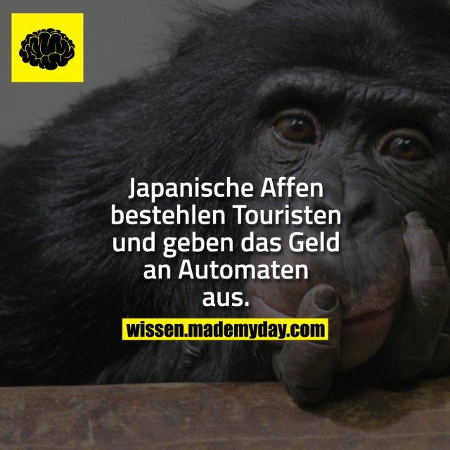 Japanische Affen bestehlen Touristen und geben das Geld an Automaten aus.