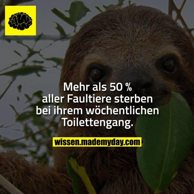 Mehr als 50 % aller Faultiere sterben bei ihrem wöchentlichen Toilettengang.