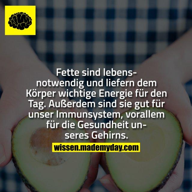 Fette sind lebensnotwendig und liefern dem Körper wichtige Energie für den Tag. Außerdem sind sie gut für unser Immunsystem, vorallem für die Gesundheit unseres Gehirns.
