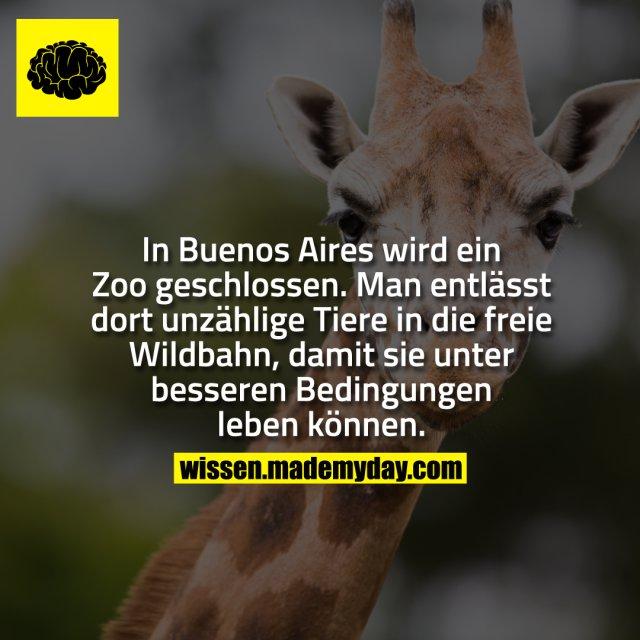 In Buenos Aires wird ein Zoo geschlossen.<br /> Man entlässt dort unzählige Tiere in die freie Wildbahn, damit sie unter besseren Bedingungen leben können.