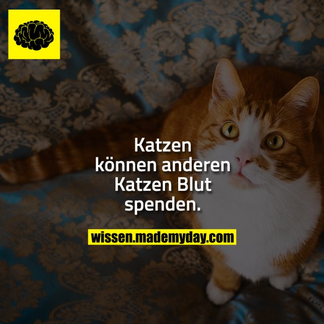 Katzen können anderen Katzen Blut spenden.
