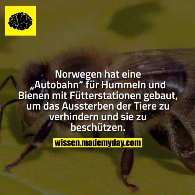 """Norwegen hat eine """"Autobahn"""" für Hummeln und Bienen mit Fütterstationen gebaut, um das Aussterben der Tiere zu verhindern und sie zu beschützen."""