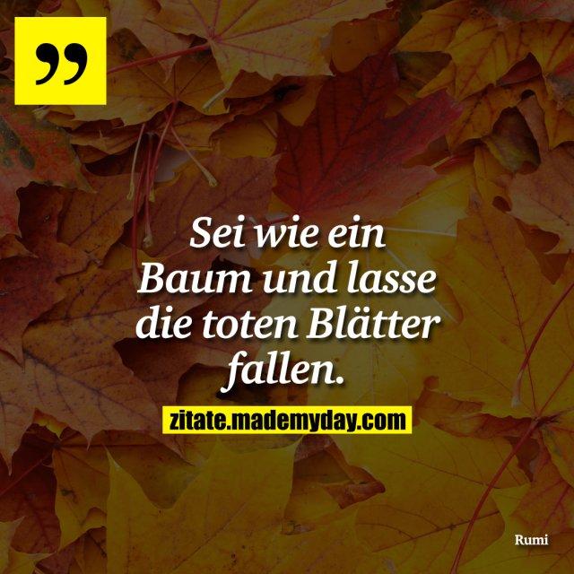 Sei wie ein Baum und lasse die toten Blätter fallen.