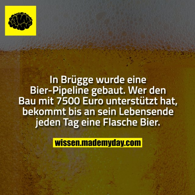 In Brügge wurde eine Bier-Pipeline gebaut. Wer den Bau mit 7500 Euro unterstützt hat, bekommt bis an sein Lebensende jeden Tag eine Flasche Bier.