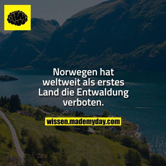 Norwegen hat weltweit als erstes Land die Entwaldung verboten.