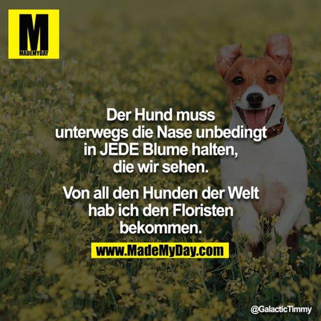Der Hund muss unterwegs die Nase unbedingt in JEDE Blume halten, die wir sehen.<br /> <br /> Von all den Hunden der Welt hab ich den Floristen bekommen.
