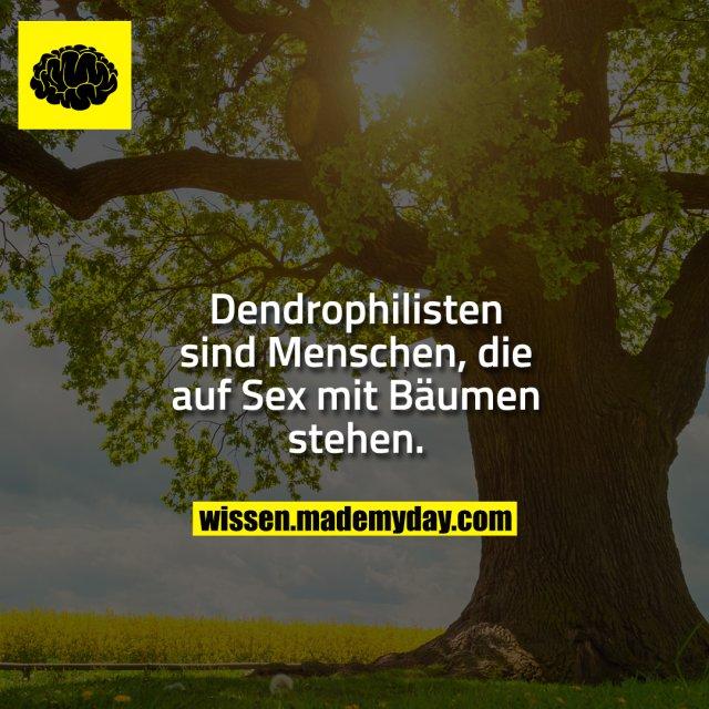 Dendrophilisten sind Menschen, die auf Sex mit Bäumen stehen.