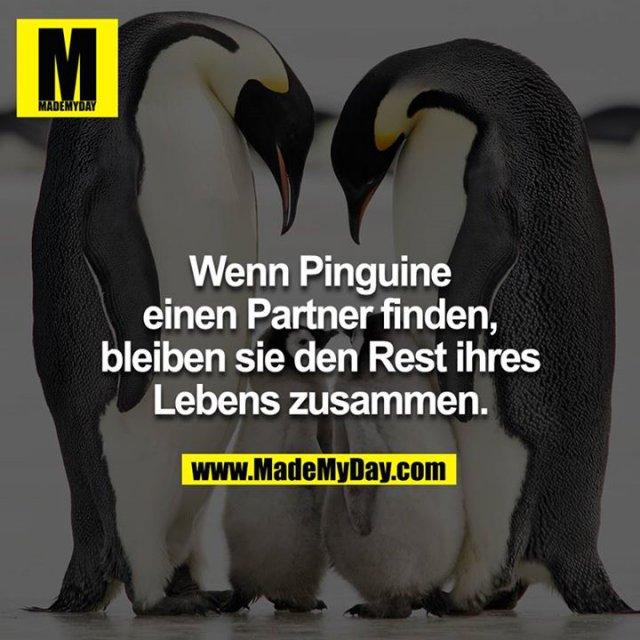 Wenn Pinguine einen Partner finden, bleiben sie den Rest ihres Lebens zusammen.