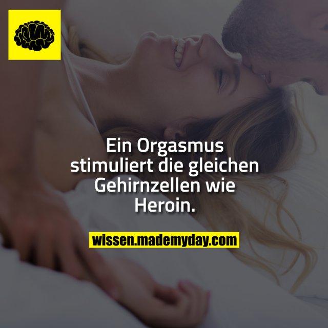 Ein Orgasmus stimuliert die gleichen Gehirnzellen wie Heroin.