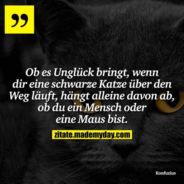 Ob es Unglück bringt, wenn dir eine schwarze Katze über den Weg läuft, hängt alleine davon ab, ob du ein Mensch oder eine Maus bist.