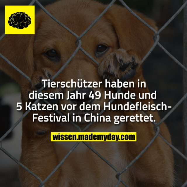 Tierschützer haben in diesem Jahr 49 Hunde und 5 Katzen vor dem Hundefleisch-Festival in China gerettet.