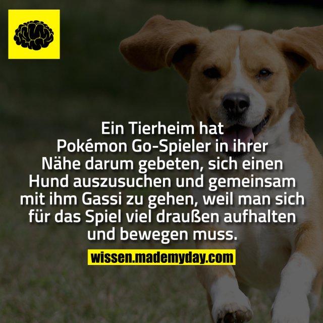 Ein Tierheim hat Pokémon Go-Spieler in ihrer Nähe darum gebeten, sich einen Hund auszusuchen und gemeinsam mit ihm Gassi zu gehen, weil man sich für das Spiel viel draußen aufhalten und bewegen muss.