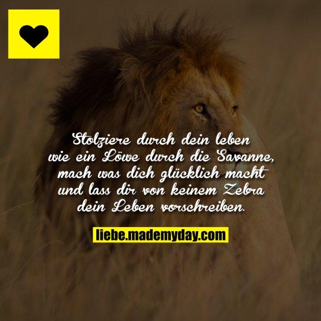 Stolziere durch dein leben wie ein Löwe durch die Savanne, mach was dich glücklich macht und lass dir von keinem Zebra dein Leben vorschreiben.