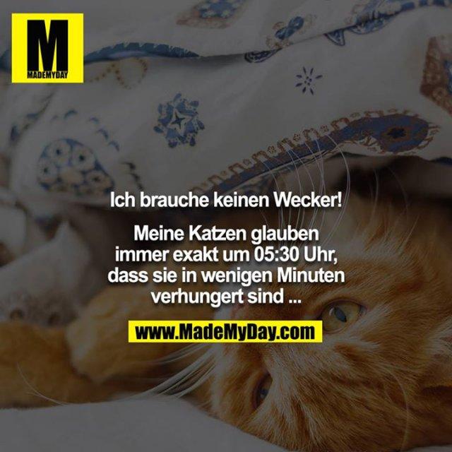 Ich brauche keinen Wecker!<br /> <br /> Meine Katzen glauben immer exakt um 05:30 Uhr, dass sie in wenigen Minuten verhungert sind ...
