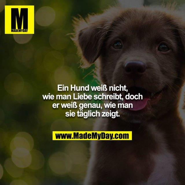 Ein Hund weiß nicht, wie man Liebe schreibt, doch er weiß genau, wie man sie täglich zeigt.