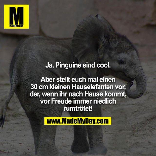 Ja, Pinguine sind cool.<br /> <br /> Aber stellt euch mal einen 30 cm kleinen Hauselefanten vor,<br /> der, wenn ihr nach Hause kommt, vor Freude immer niedlich<br /> rumtrötet!