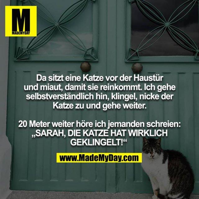 """Da sitzt eine Katze vor der Haustür und miaut, damit sie reinkommt. Ich gehe selbstverständlich hin, klingel, nicke der<br /> Katze zu und gehe weiter.<br /> <br /> 20 Meter weiter höre ich jemanden schreien: """"SARAH, DIE KATZE HAT WIRKLICH GEKLINGELT!"""""""