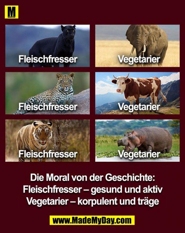 Fleischfresser<br /> Vegetarier<br /> Die Moral von der Geschichte: Fleischfresser - gesund und aktiv<br /> Vegetarier - korpulent und träge