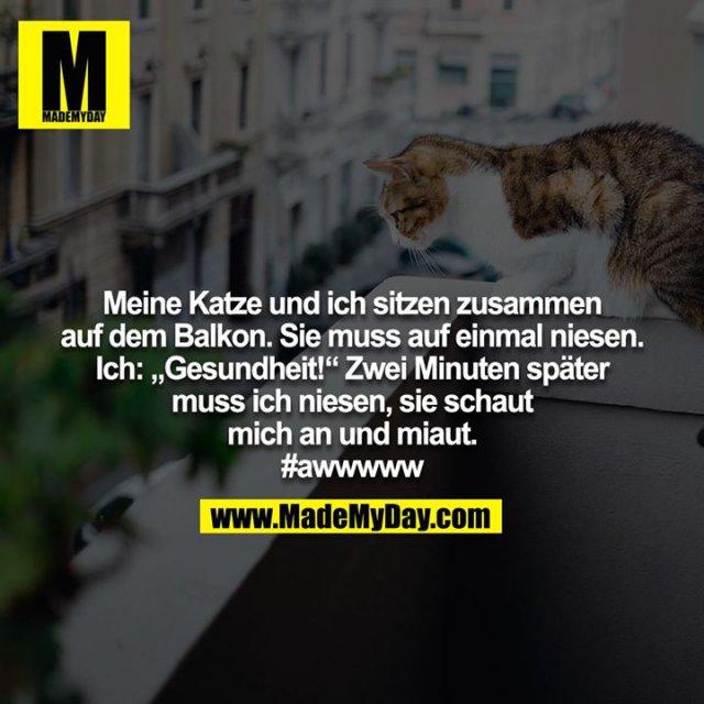 """Meine Katze und ich sitzen zusammen auf dem Balkon. Sie muss auf einmal niesen. Ich: """"Gesundheit!"""" Zwei Minuten später muss ich niesen, sie schaut mich an und miaut.<br /> #awwwww"""