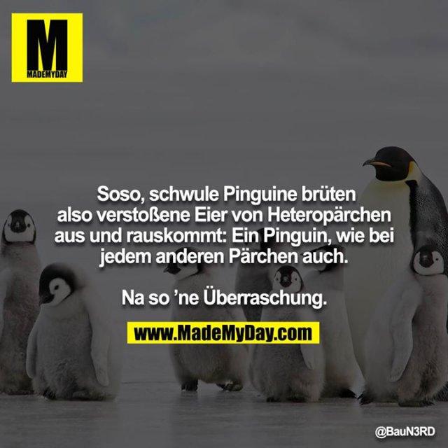Soso, schwule Pinguine brüten also verstoßene Eier von Heteropärchen aus und rauskommt: Ein Pinguin, wie bei<br /> jedem anderen Pärchen auch.<br /> <br /> Na so 'ne Überraschung.