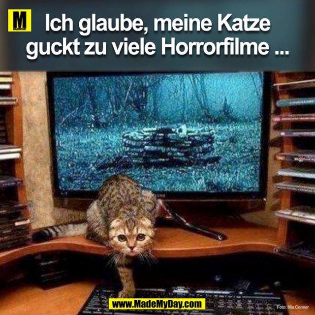 Ich glaube, meine Katze guckt zu viele Horrorfilme...