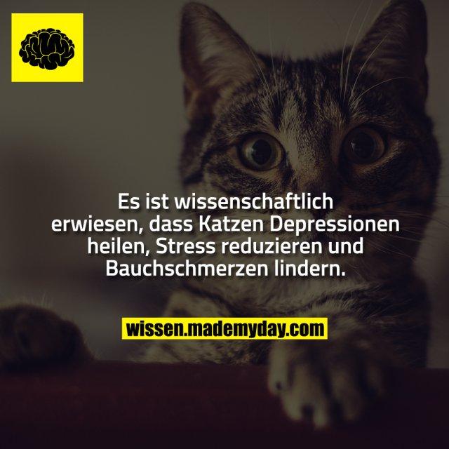 Es ist wissenschaftlich erwiesen, dass Katzen Depressionen heilen, Stress reduzieren und Bauchschmerzen lindern.