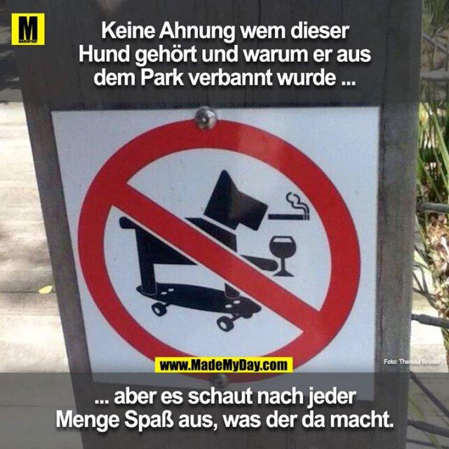 Keine Ahnung wem dieser Hund gehört und warum er aus dem Park verbannt wurde ...<br /> ... aber es schaut nach jeder Menge Spass aus, was der da macht.