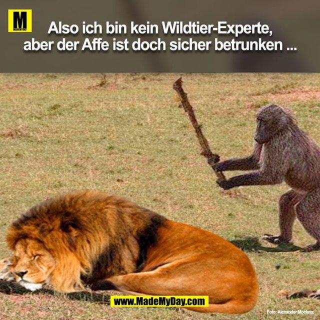 Also ich bin kein Wildtier-Experte, aber der Affe ist doch sicher betrunken ...<br />