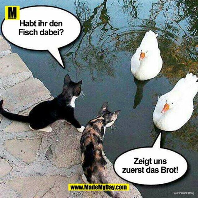 Habt ihr den Fisch dabei!?<br /> <br /> Zeigt uns zuerst das Brot!