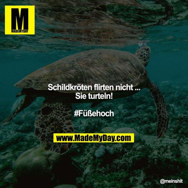 Schildkröten flirten nicht ...<br /> Sie turteln!<br /> <br /> #Füßehoch