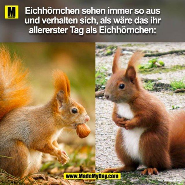 Eichhörnchen sehen immer so aus und verhalten sich, als wäre das ihr allererster Tag als Eichhörnchen: