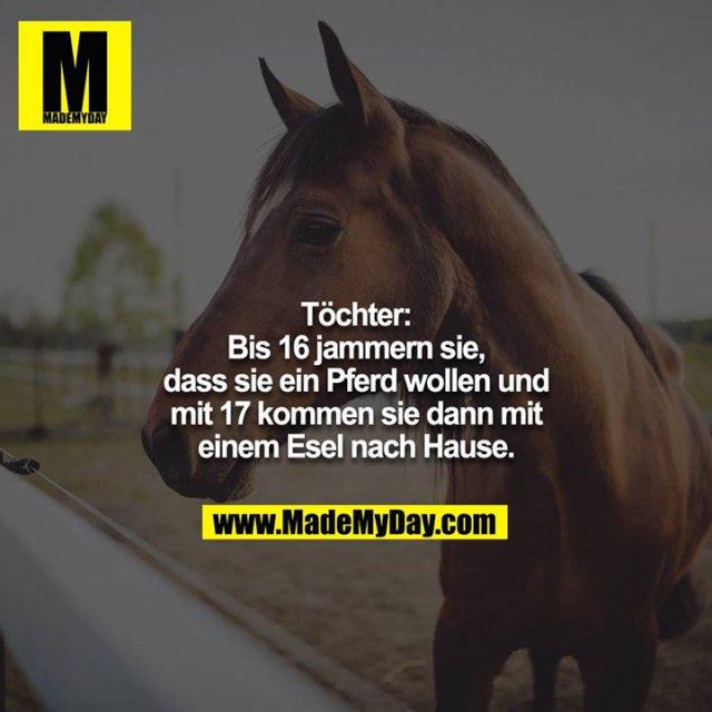 Töchter:<br /> Bis 16 jammern sie, dass sie ein Pferd wollen und mit 17 kommen sie dann mit einem Esel nach Hause.
