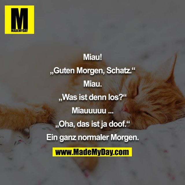 "Miau!<br /> <br /> ""Guten Morgen, Schatz.""<br /> <br /> Miau.<br /> <br /> ""Was ist denn los?""<br /> <br /> Miauuuuu ...<br /> <br /> ""Oha, das ist ja doof.""<br /> <br /> Ein ganz normaler Morgen."