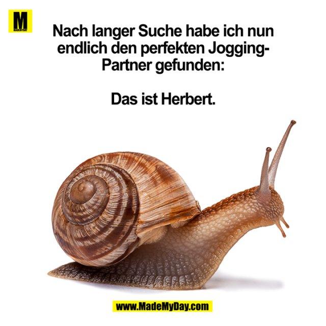 Nach langer Suche habe ich nun endlich den perfekten Jogging-Partner gefunden: Das ist Herbert.