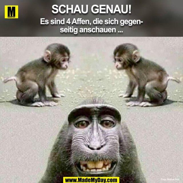 Schau genau!<br /> Es sind 4 Affen, die sich gegenseitig anschauen...