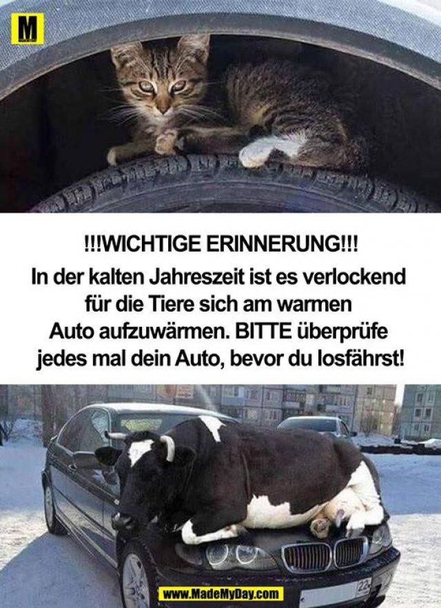 !!!WICHTIGE ERINNERUNG!!!<br /> In der kalten Jahreszeit ist es verlockend für die Tiere sich am warmen Auto aufzuwärmen. BITTE überprüfe jedes mal dein Auto, bevor du losfährst!