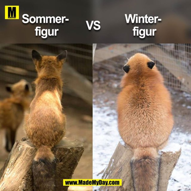 Sommer- <br /> figur<br /> <br /> vs. <br /> <br /> Winter-<br /> figur