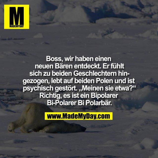 """Boss, wir haben einen neuen Bären entdeckt. Er ist zu beiden Geschlechtern hingezogen, lebt auf beiden Polen und ist psychisch gestört. """"Meinen sie etwa?""""<br /> Richtig, es ist ein Bipolarer Bi-Polarer Bi Polarbär."""